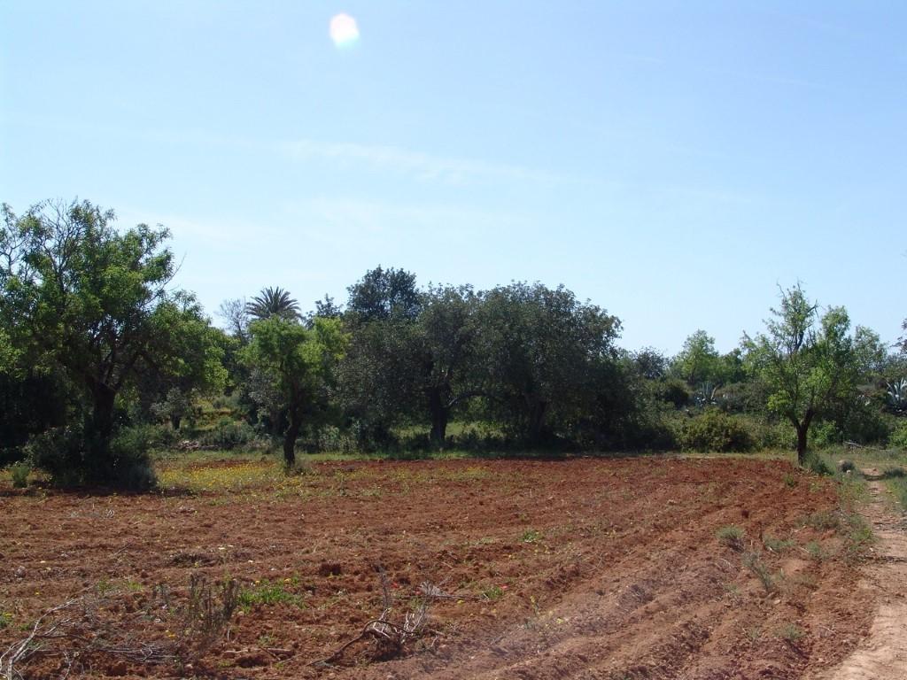 Terre Mixte En Vente 224 Olh 227 O Algarve Sma10853