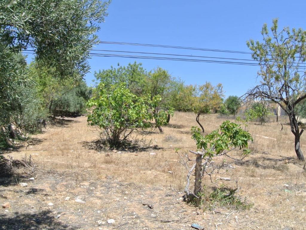 Grundstück_zum_Verkauf_in_Faro_SMA11101