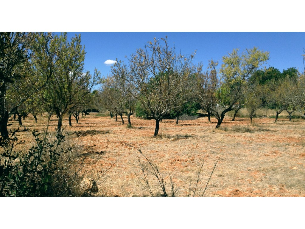Urban Land_for_sale_in_Loulé_sma11364