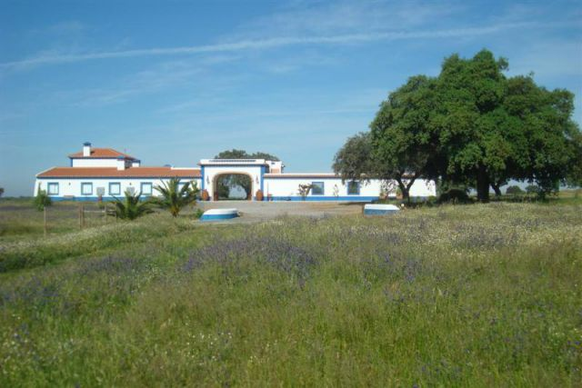 Equestrian Property_for_sale_in_Beja_SCO11781