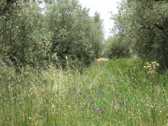Land_for_sale_in_Alcobaca_SCO11925