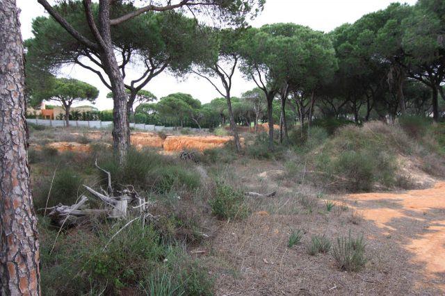Land_for_sale_in_Quinta do Lago, Almancil, Vale do Lobo, Vilamoura, Quarteira_EMA12152