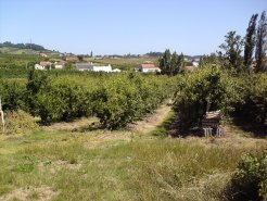 Country House_for_sale_in_Alcobaca_LSO1265