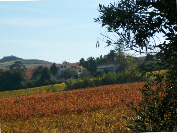 Vineyard_for_sale_in_Torres Vedras, Vila Franca de Xira, Ericeira_sma12932