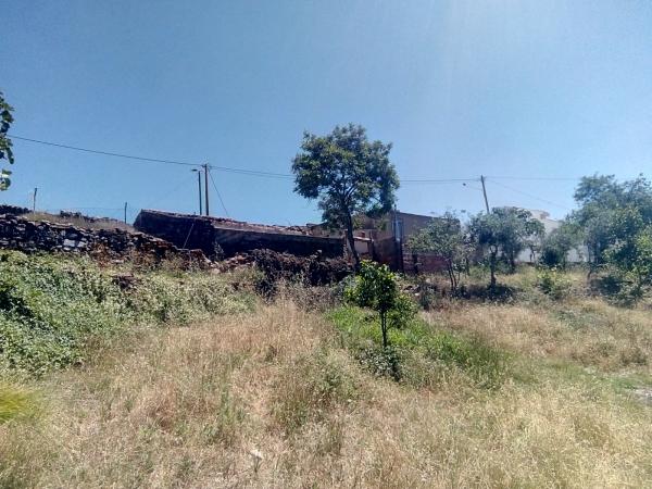 Exploitation forestière_en_vente_à_Sao Bras de Alportel_SMA13019