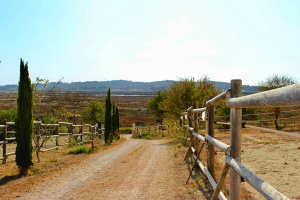 Equestrian Property_for_sale_in_Mexilhoeira Grande_sma13174