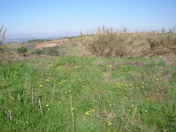 Land_for_sale_in_Alcobaca_JHE2337