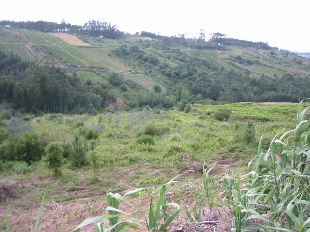 Land_for_sale_in_Caldas da Rainha_LBA2425