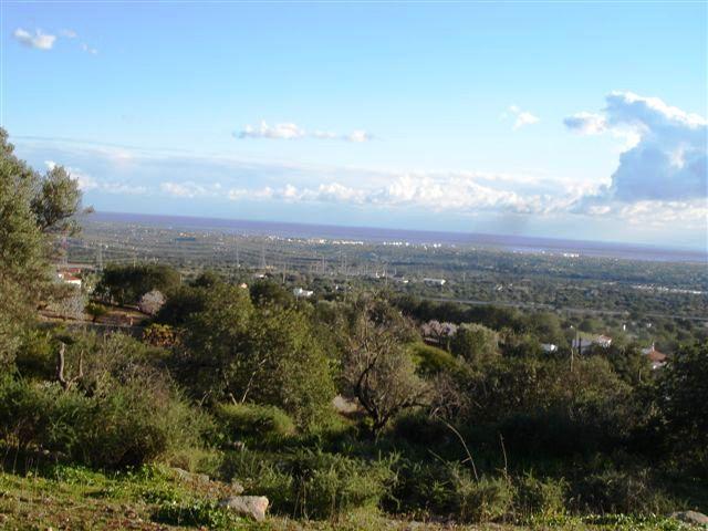 Imobiliário - Vendas -Terrenos - FARM – Tavira, Algarve. Dimensions: 85.000m2, covered area approx.800m2 - ID 6649