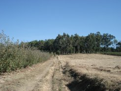 Land_for_sale_in_Alcobaca_VPE4073