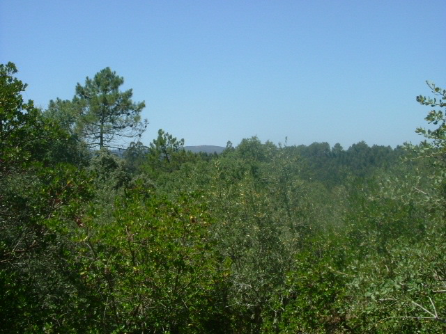 Land_for_sale_in_Pombal_PCO4181