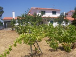 Country House_for_sale_in_Alcobaca_PCO4632