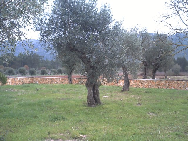 Country House_for_sale_in_Alcobaca_VPE4928
