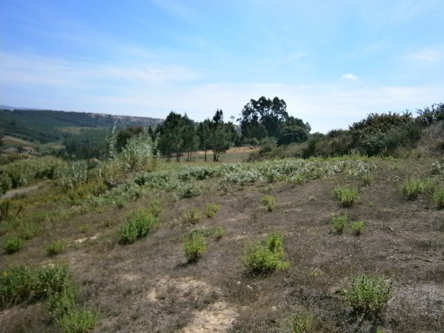 Land_for_sale_in_S.Martinho do Porto_ARO5011