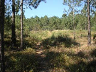 Land_for_sale_in_Aljezur_LSA5035
