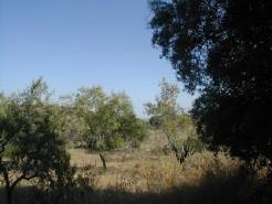Salir - Imobiliário - Vendas -Terrenos - Land with Ruin - ID 6540