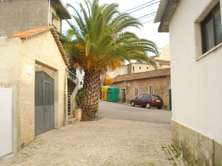 Obidos - Real Estate - Sales - Offices & Shops & Commercial - Silver Coast Portugal - Farm with 2 great warehouses - ID 6668