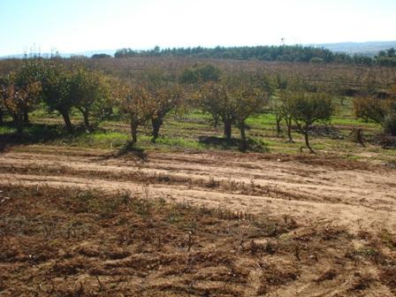 Imobiliário - Vendas -Terrenos - Nice plot for development countryside close to Obidos - Portugal Silver Coast - ID 6527