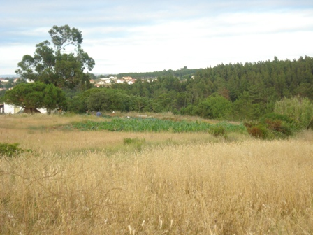 Land_for_sale_in_Caldas da Rainha_HPO5345