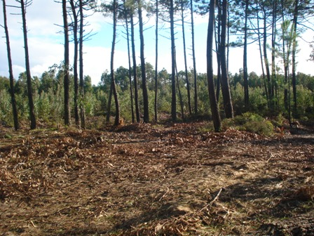 Land_for_sale_in_Caldas da Rainha_HPO5361
