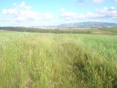 Land_for_sale_in_Caldas da Rainha_HPO5373