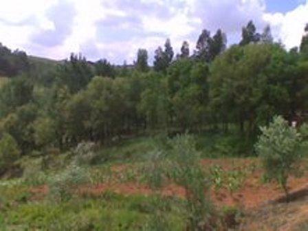 Imobiliário - Vendas - Casas - Silver Coast Real Estate - Ruin in a peaceful area - stunning views – countryside - ID 4603