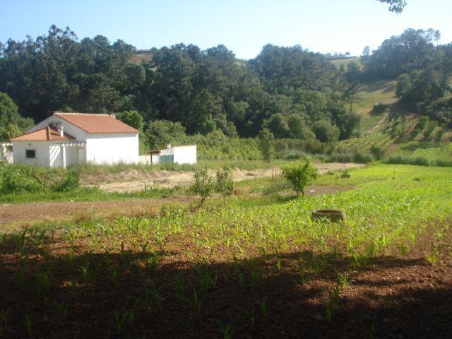 Imobiliário - Vendas -  Moradias - Portugal Silver Coast - Nice traditional villa in the countryside - ID 5489