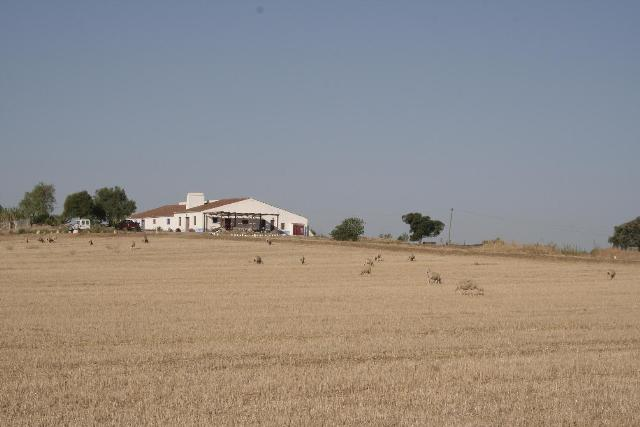 Country House_for_sale_in_Evora_SMA5841