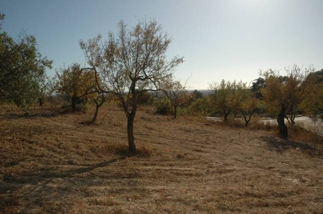 Land_te_koop_in_Faro_LDO6373