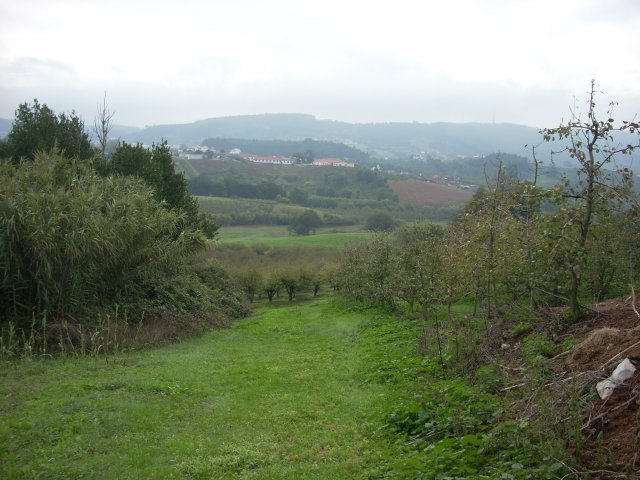 Country House_for_sale_in_rio maior_CSO6490