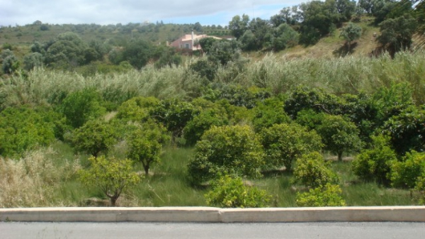 Maison En Vente 224 Silves Algarve Sma7571