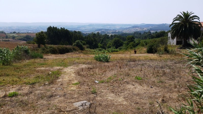 Land_for_sale_in_Alcobaca_SCO8352