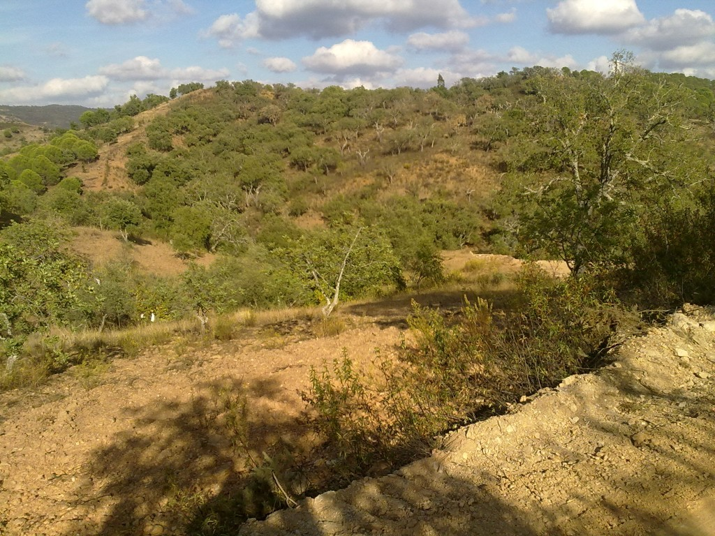 Land_for_sale_in_São Brás de Alportel_SMA8904