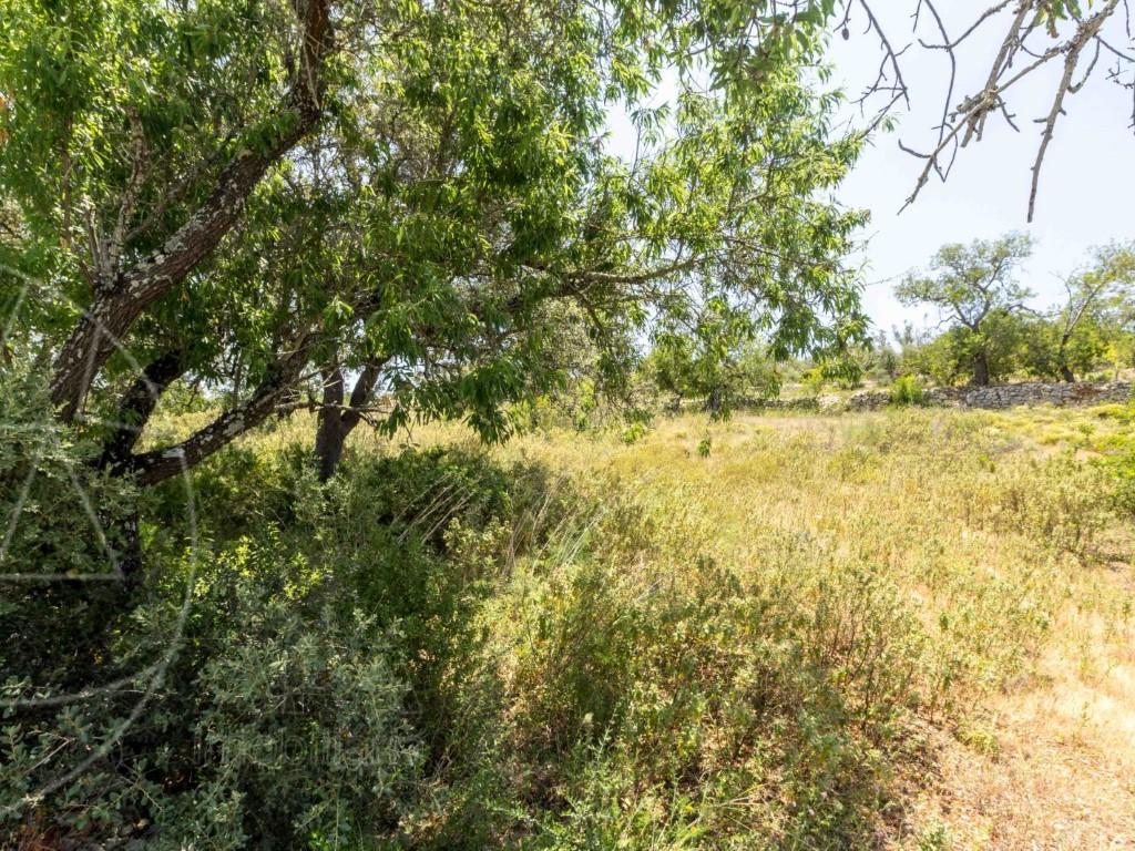 Rural Land_zum_Verkauf_in_Loul�_SMA8905