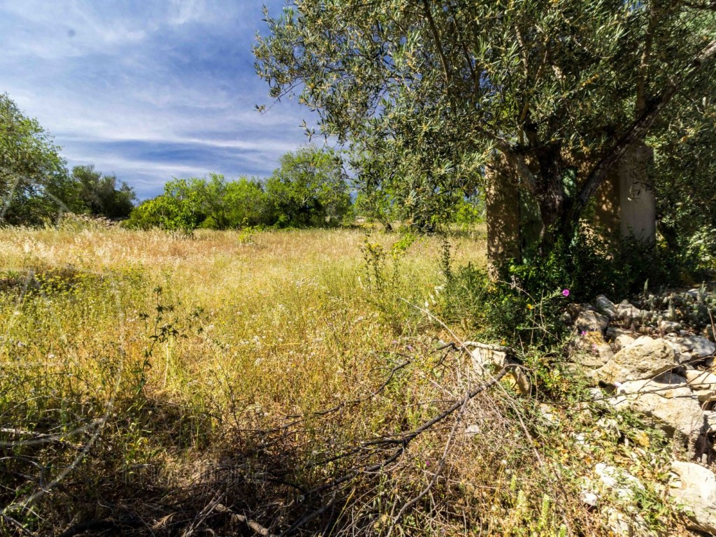 Rural Land_for_sale_in_Loulé_SMA8914