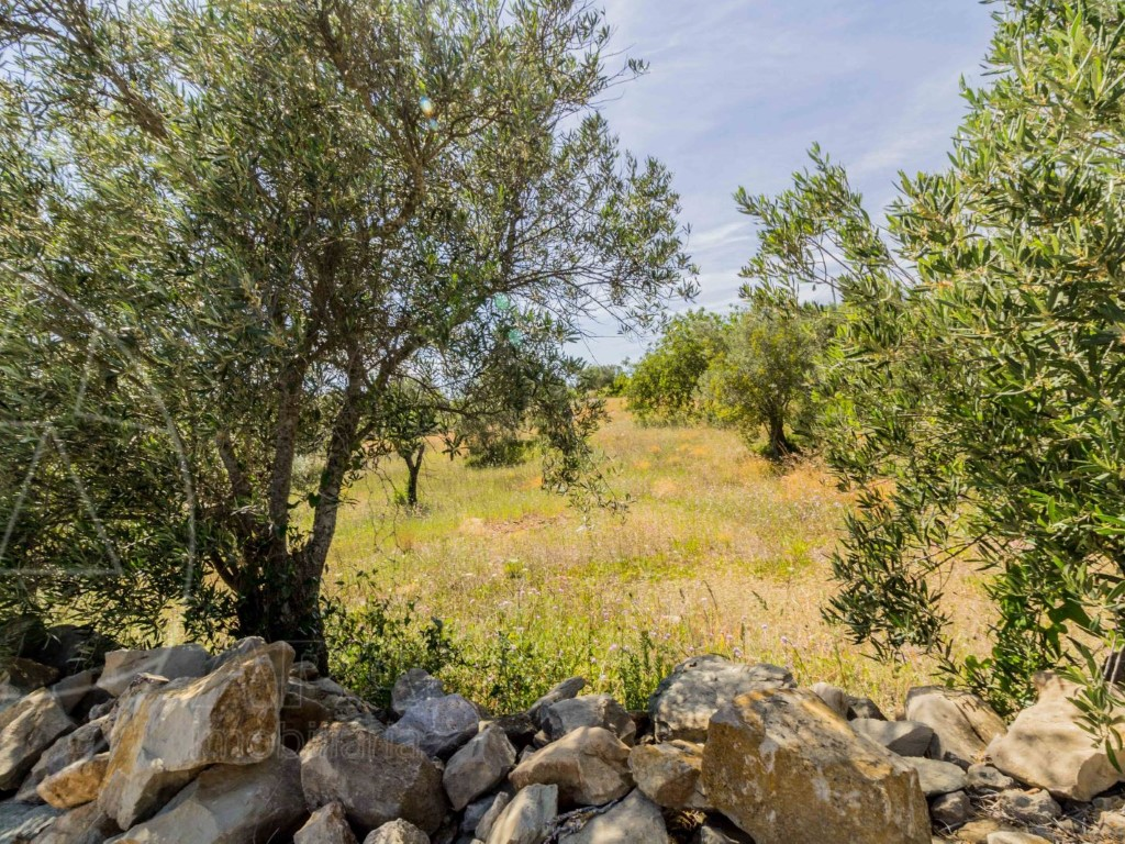 Rural Land_for_sale_in_Loulé_SMA8915