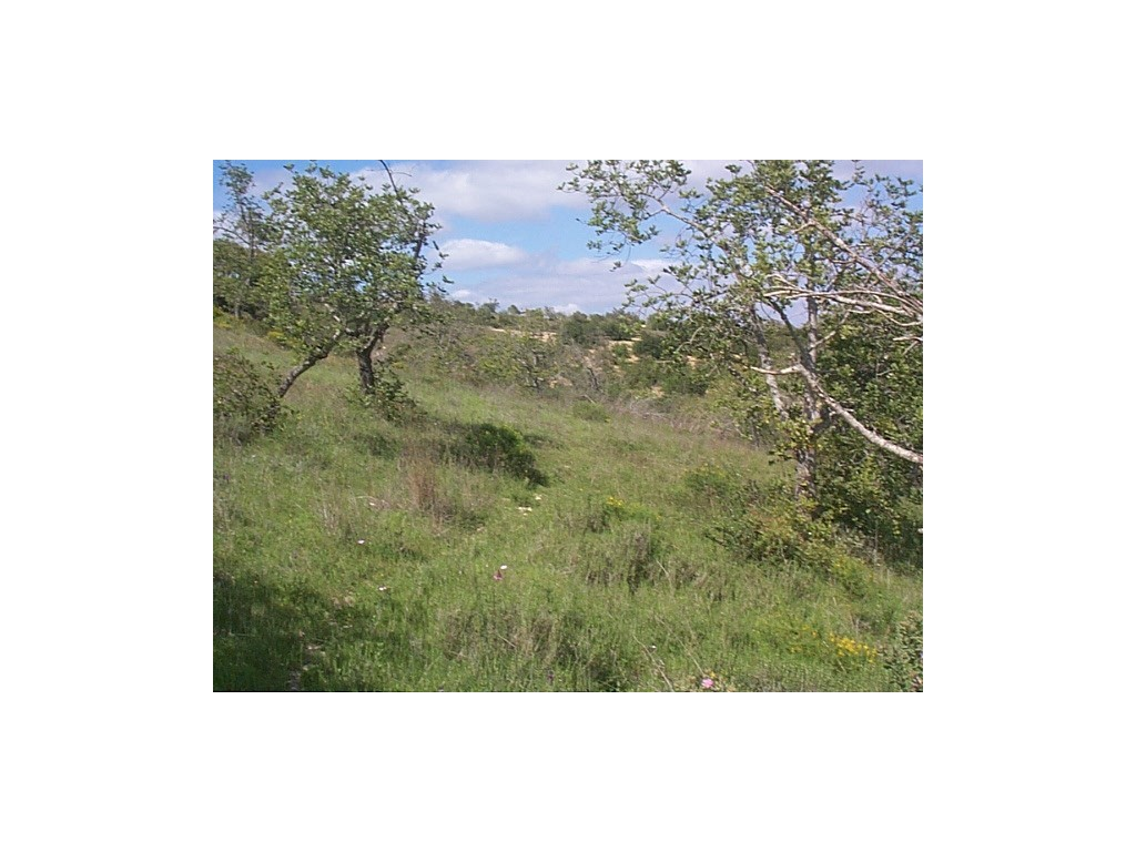 Land_for_sale_in_Loulé_SMA8926