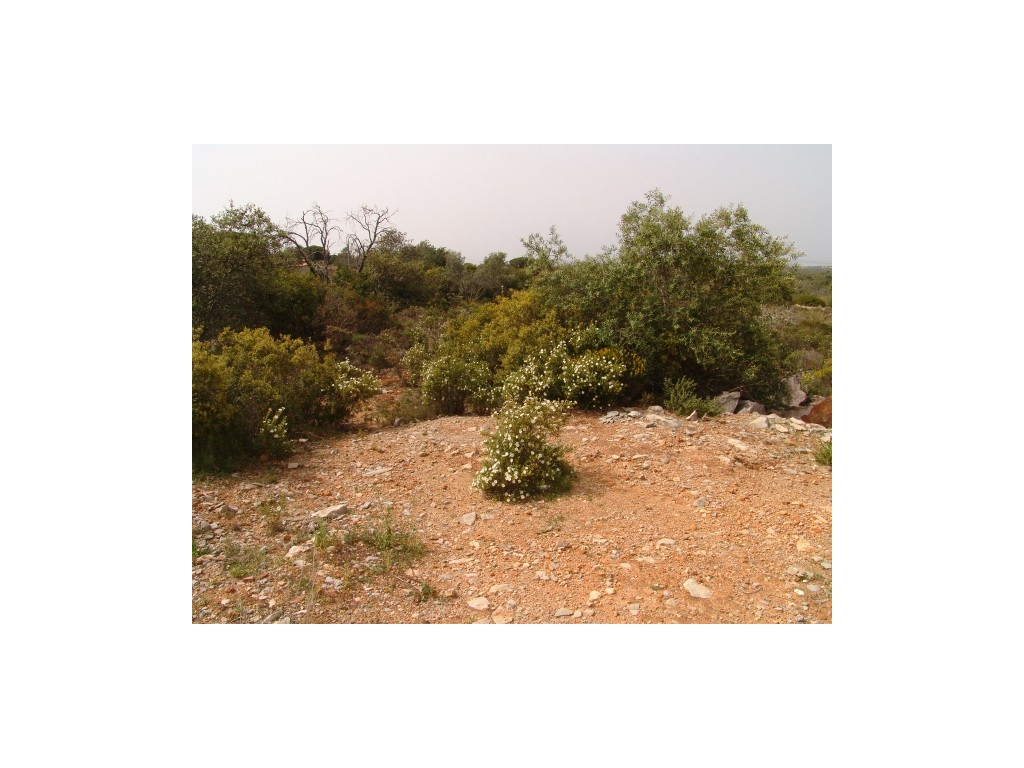 Plot_for_sale_in_Olhão_SMA8962