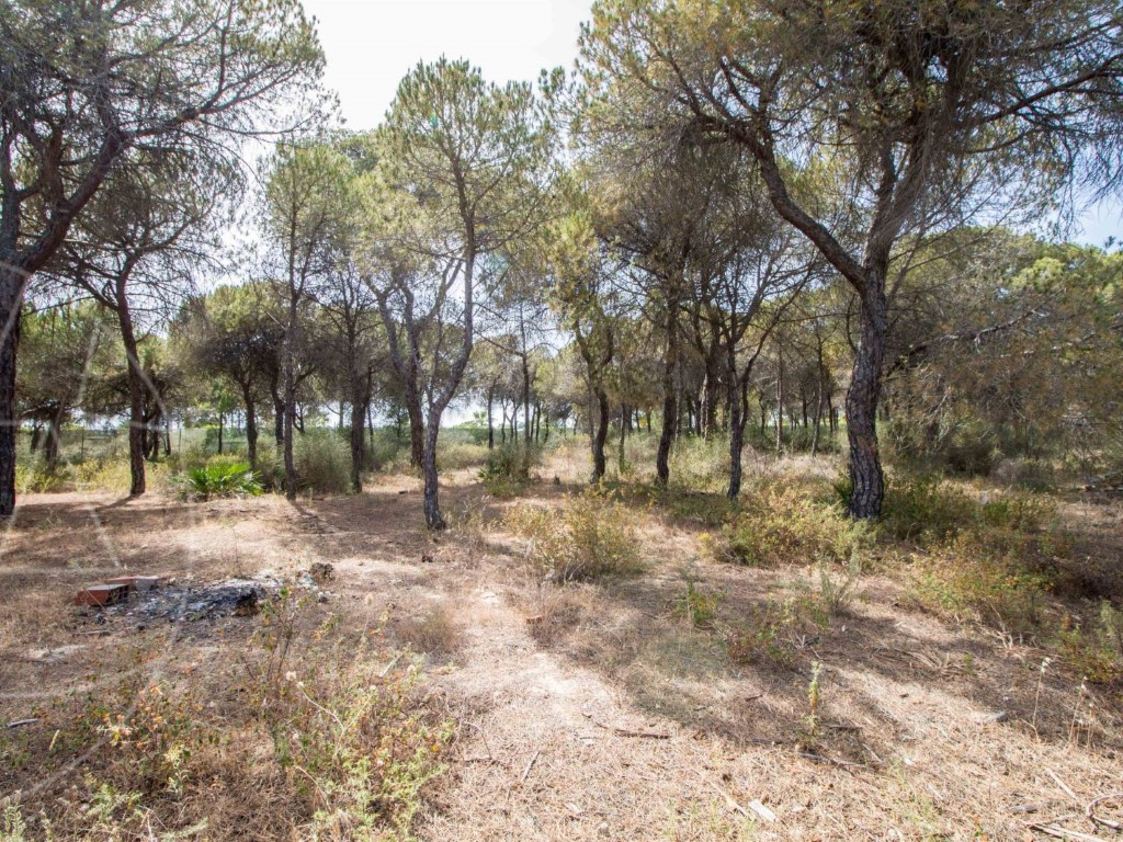 Land_for_sale_in_Loulé_SMA8964