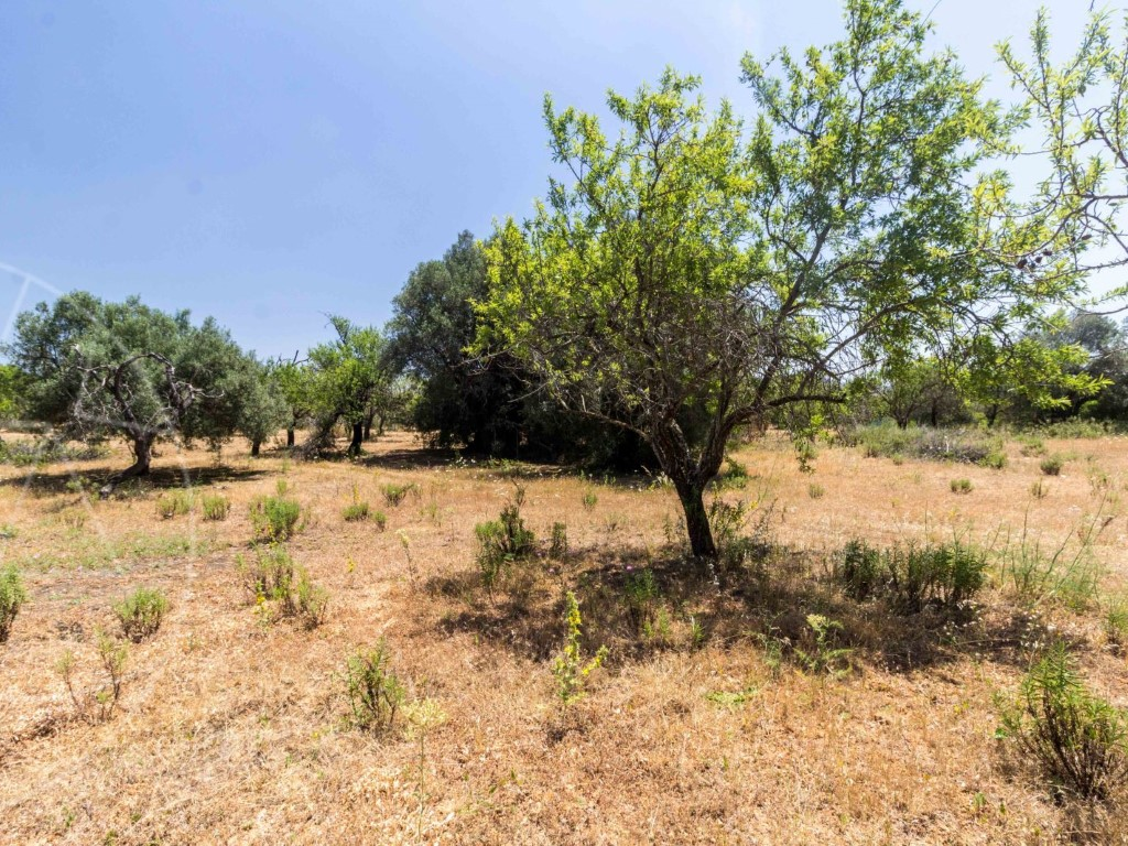 Rural Land_for_sale_in_Loulé_SMA8992
