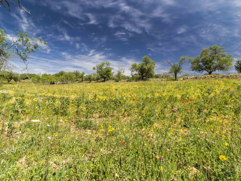 Rural Land_for_sale_in_Loulé_sma9073