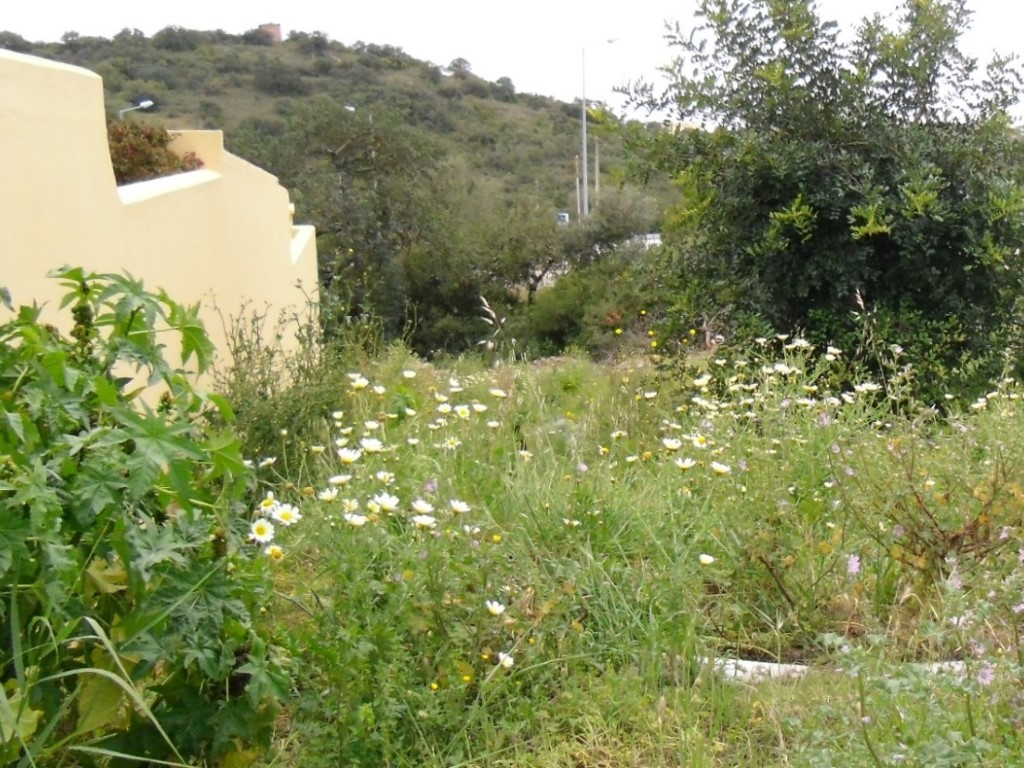 Plot_for_sale_in_Loulé_SMA9075