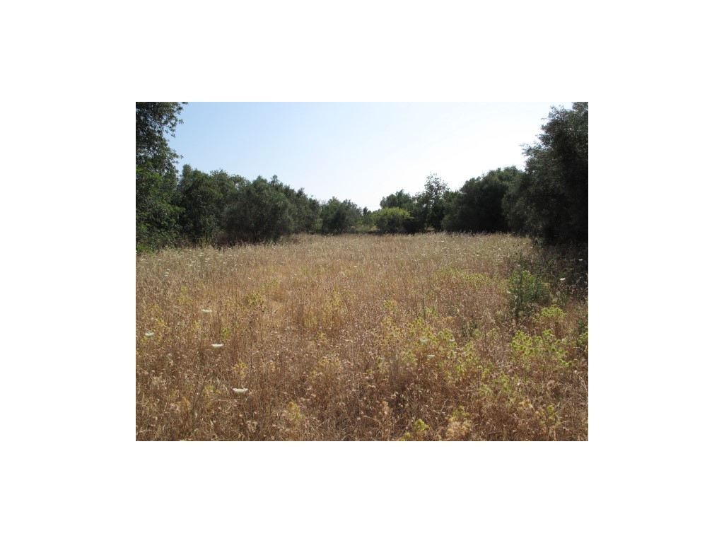 Mixed Land for sale in Gorjões sma10812