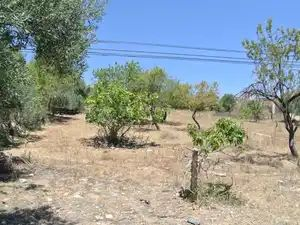 Land_for_sale_in_Vale de Seixo (Estoi)_sma11101