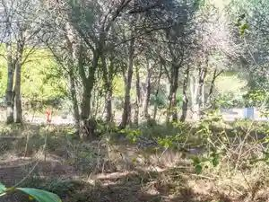 Plot_for_sale_in_Vale de Lobo_SMA11198