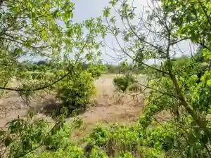 Land_for_sale_in_Quarteira_sma11567