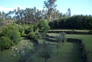 Country House_for_sale_in_Tondela_LSO1168