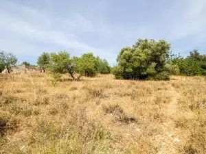 Rural Land_for_sale_in_Almancil_sma11680