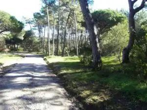 Land_for_sale_in_Sintra_SLI11879