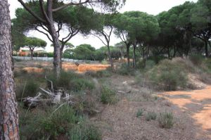 Land_for_sale_in_Quarteira_EMA12152